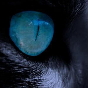 Œil de lynx